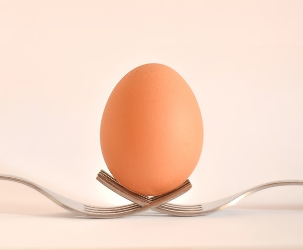 eggs as a source of clean energy